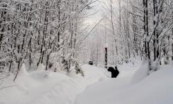 Black Russian Terrier, Rysk Svart Terrier,  Renko, Nilo
