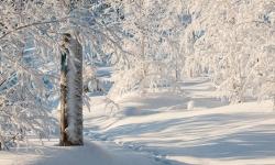 Vinter Söromåsen hälsingland